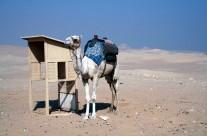 Desert view at Saqqara
